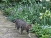 Huskatt i holländsk trädgård
