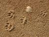 Tassavtryck på sandstranden, Karatj
