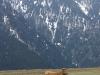 Kor i turkiska bergen