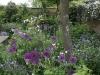 Engelsk trädgård med allium och perenner
