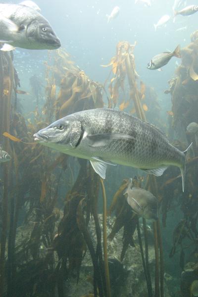 Akvariet i Waterfront, Kapstaden  Foto: Susanna Rosén